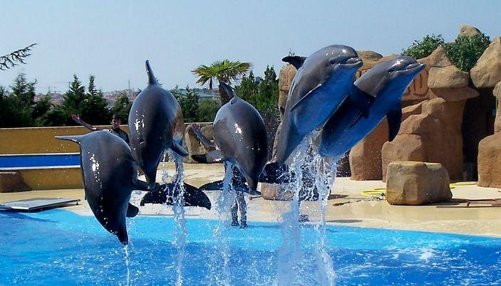 Marineland is a marine Zoo - Costa Brava