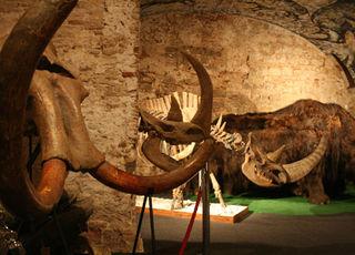Museo del Mamut - Barcelona